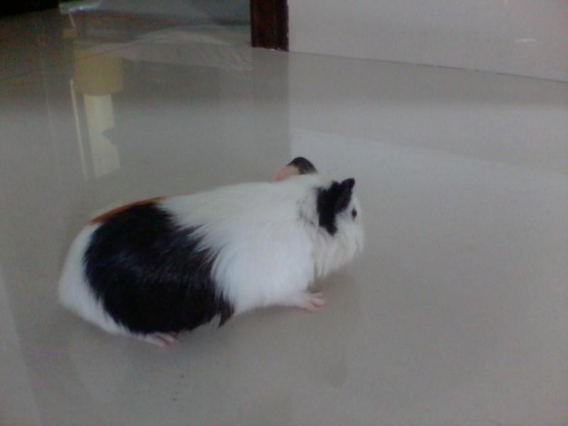 我家的大肥鼠